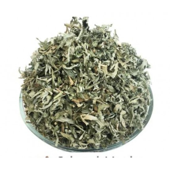 Wormwood Herb (Artemisia absinthium) Medicinal Herb - Organic, Freshley Grown 4oz