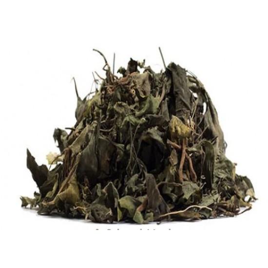Duppy Gun – Ruellia Tuberosa - Powder Medicinal Herb 4oz