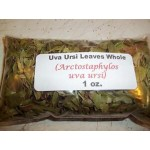 Uva Ursi Leaf Whole (Arctostaphylos uva ursi) 1 oz.