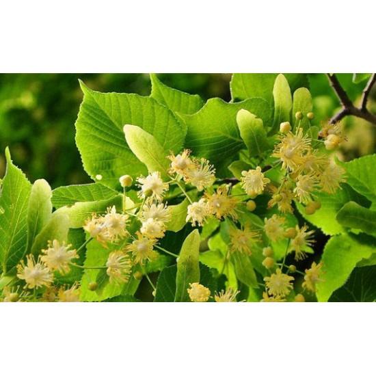 Linden (Tila) Leaves & Flowers 100/450g