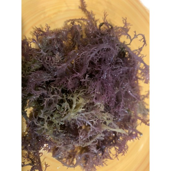 Sea Moss BULK WILDCRAFTED Raw Full Spectrum Jamaican Irish 1Lb