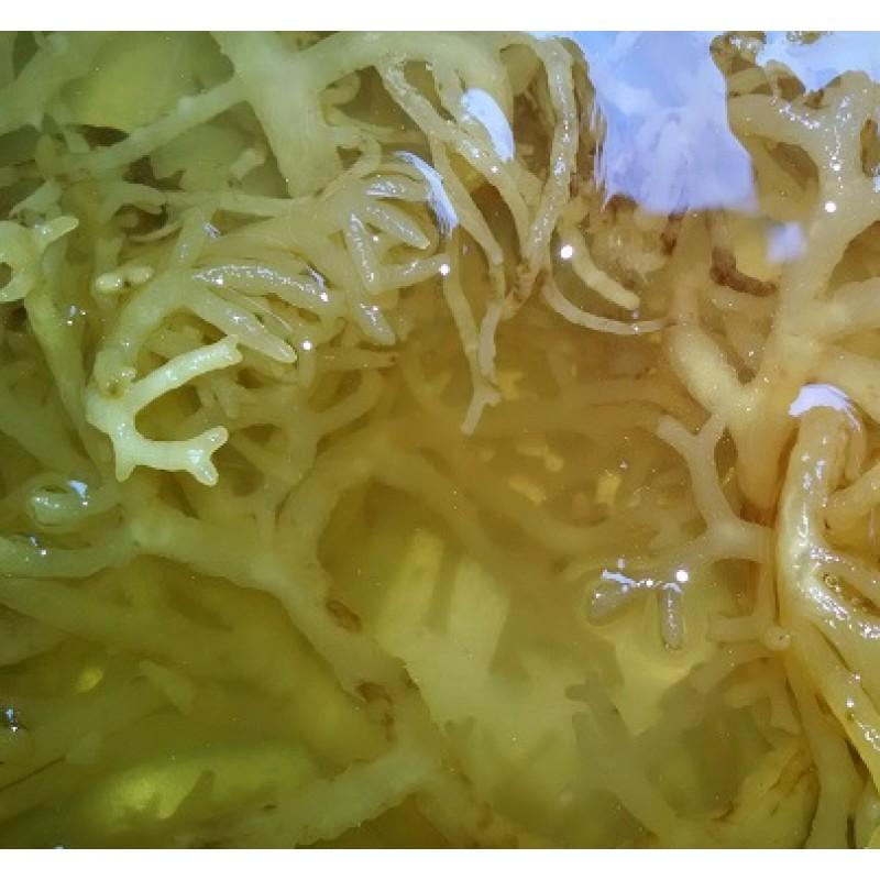 Sea Moss/Irish Moss 100% Natural Dried Wild-Crafted- (Dr  Sebi