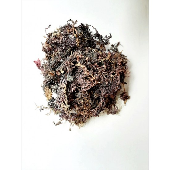 100% Wildcrafted Purple Sea Moss (Chrondrus Crispus) Dr. Sebi Approved from Ghana Sea Coast 3oz