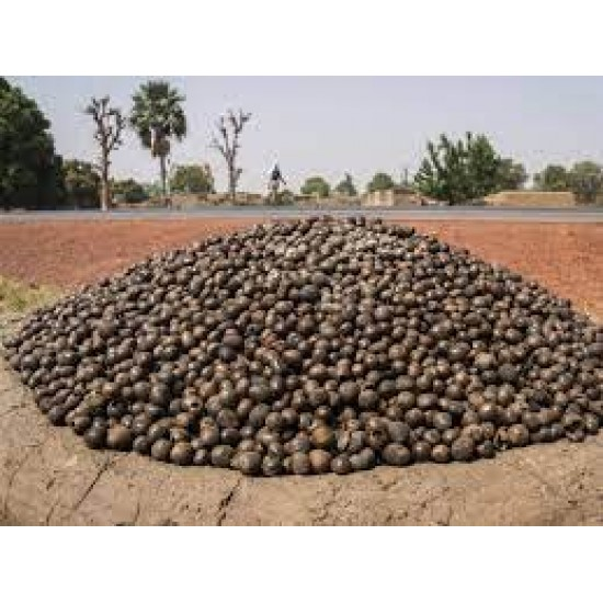 10lbs Raw/Unrefined Shea butter from Shea Nuts gathered in the wild in The North of Ghana