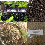 Elderberry Flower & Berries Whole Boosting Your Immune System- coughs, flu, colds, fever, sinus pain, back and leg pain- 4oz Each